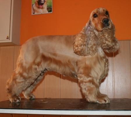 Pes si vykusuje srst nad ocasem